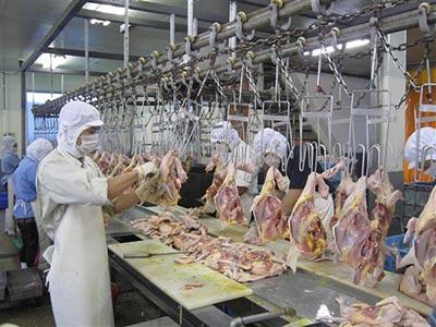 Đơn hàng giúp việc công xưởng chế biến thịt gà Khải Hinh – Đài Trung