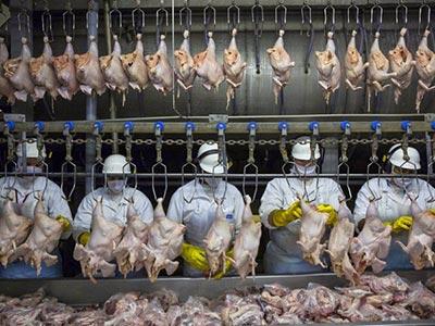 Tuyển giúp việc công xưởng thực phẩm Thượng Đức - Đài Loan