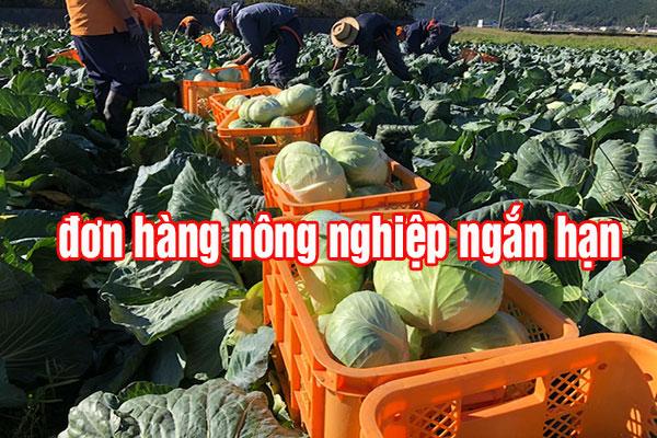 Đơn hàng nông nghiệp một năm lương từ 25-40 triệu, phí chỉ 45 triệu