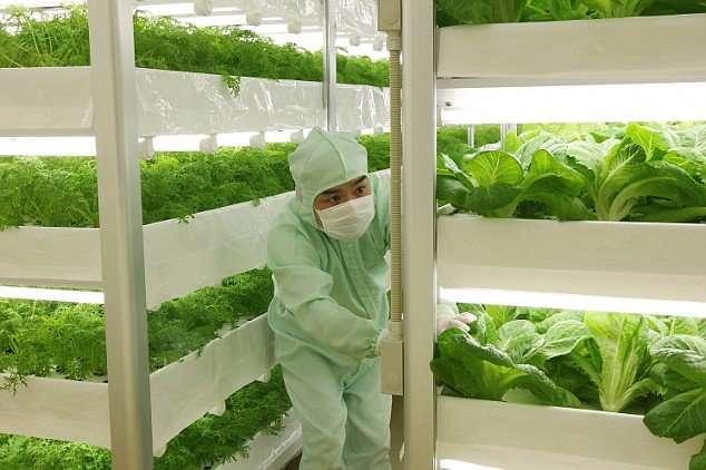 Đơn hàng trồng rau trong nhà kính khá tốt cho lao động nam và nữ